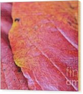 Abstract Dogwood In Autumn Wood Print