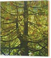 Abstract Foliage Wood Print