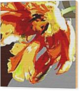 Abstract Parrot Tulip Wood Print