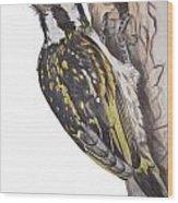 Acacia Pied Barbet Wood Print