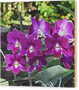 Accented Purple Orchid  Wood Print