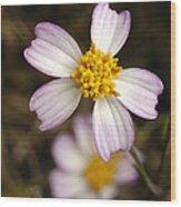 Aceitillo Flower Wood Print