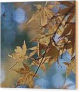 Acer Autumn Wood Print