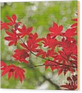 Acer Leaves Wood Print