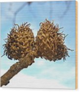 Acorns Have Left The Nest Wood Print