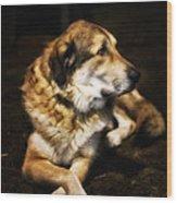 Adam - The Loving Dog Wood Print by Bill Tiepelman