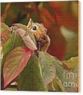 Adorable Chipmunk Hiding In Autumn Leaves Wood Print