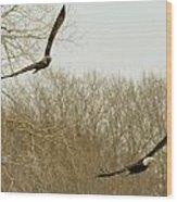 Adult And Immature Bald Eagle Flying Wood Print