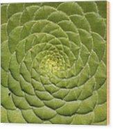 Aeonium Tabulifrome Wood Print