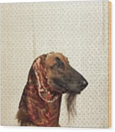 Afghan Hound Wearing Scarf Wood Print