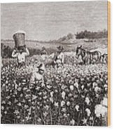 African Americans Picking Cotton Wood Print by Everett