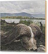 African Cape Buffalo Skull, Ngorongoro Wood Print