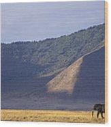 African Elephant In Ngorongoro Crater Wood Print