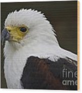 African Fish Eagle 1 Wood Print