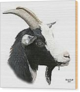 African Goat Wood Print