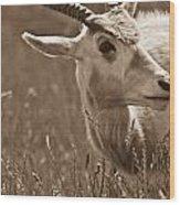 African Grassland Feeder 2 Wood Print