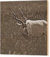 African Grassland Feeder Wood Print