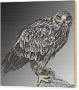 African Tawny Eagle Wood Print