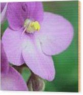 African Violet Flower Wood Print