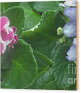 African Violets Intertwined I Wood Print