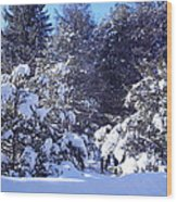 After A New England Snowstorm Wood Print