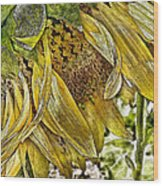 Afternoon Sunflower Wood Print