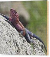 Agama Lizard Wood Print