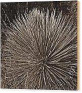 Agave 1 Wood Print