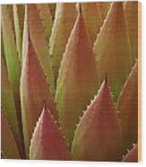 Agave Yellow Pink Wood Print