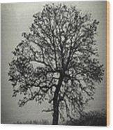 Age Old Tree Wood Print