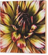 Aged Dahlia Wood Print