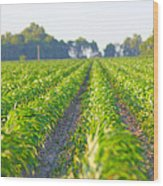 Agriculture- Corn 1 Wood Print