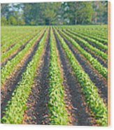 Agriculture-soybeans 5 Wood Print