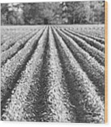 Agriculture-soybeans 6 Wood Print