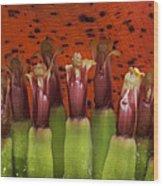 'ahui Mai'a O Kepaniwai Wood Print