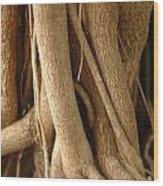 Air Roots Wood Print by Noah Katz