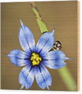 Alabama Blue-eyed Grass Wildflower - Sisyrinchium Angustifolium Wood Print