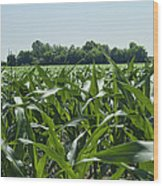Alabama Field Corn Crop Wood Print