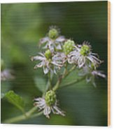Alabama Wild Blackberries In The Making Wood Print