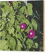 Alabama Wild Pink Morning Glories Wood Print