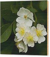 Alabama Wildflower Roses - Rosa Multiflora Wood Print