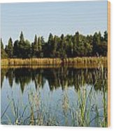 Alafia River State Park Wood Print