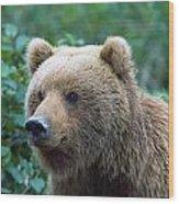 Alaskan Brown Bear Wood Print