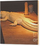 Albino Alligator Wood Print
