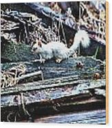 Albino Squirrel Wood Print