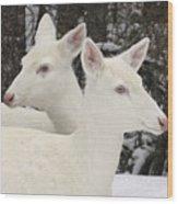 Albino White Tailed Deers Wood Print
