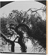 Alcatraz Tree Wood Print by Ty Helbach