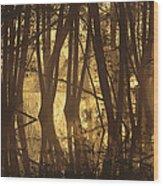 Alder Tree Marshland At Sunrise Wood Print