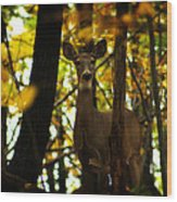 Alert Doe Wood Print by Scott Hovind