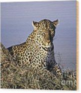 Alert Female Leopard Wood Print